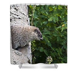 Groundhog Day Shower Curtain by Bill Cannon