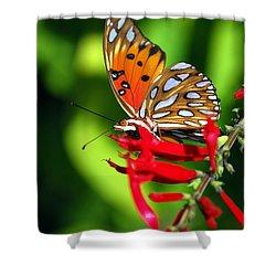 Gulf Fritillary Shower Curtain by Skip Willits