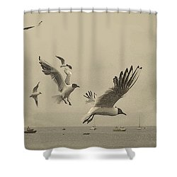 Gulls Shower Curtain by Linsey Williams