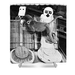 Harlows Monkey Experiment Shower Curtain by Photo Researchers, Inc.