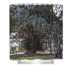 Hawaiian Banyan Tree Shower Curtain by Daniel Hagerman