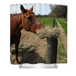Hay Is For Horses Shower Curtain by Bill Cannon