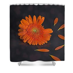 He Loves Me... Shower Curtain by Joana Kruse