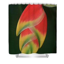 Heliconia Rostrata - Hanging Heliconia Shower Curtain by Sharon Mau