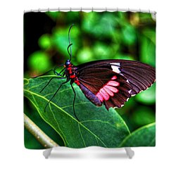 Hello Flutterby Shower Curtain by Randy Aveille