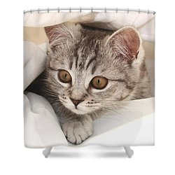Hello Kitten Shower Curtain by Claudia Moeckel
