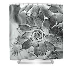 Hen And Chicks Digital Art Shower Curtain by Debbie Portwood