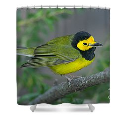Hooded Warbler Shower Curtain by Clarence Holmes