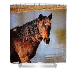 Horse By The Water Shower Curtain by Jai Johnson