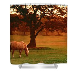 Horse Shower Curtain by Carl Purcell and Photo Researchers