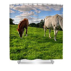 Horses Grazing Shower Curtain by Rob Hawkins