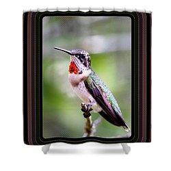 Hummingbird Card Shower Curtain by Travis Truelove