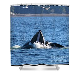 Humpback Whale Shower Curtain by Pamela Walrath