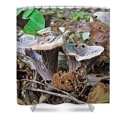 Hygrophorus Caprinus Mushrooms Shower Curtain by Mother Nature