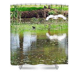 Ibis Over His Reflection Shower Curtain by Kaye Menner