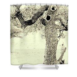 Ichabod Lane Shower Curtain by Joe Jake Pratt