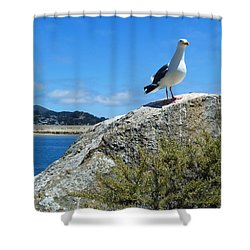 I'm King Of The World Shower Curtain by Methune Hively