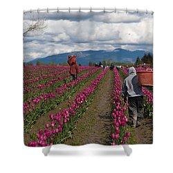 In The Tulip Fields Shower Curtain by Mike Reid