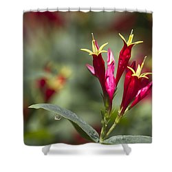 Indian Pink - Spigelia Marilandica - Firecracker Wildflowers Shower Curtain by Kathy Clark