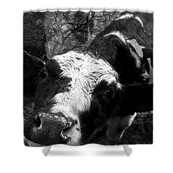 Inquisitive Zoey With Ellamay Shower Curtain by Danielle Summa