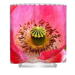Interior Design Shower Curtain by Karon Melillo DeVega
