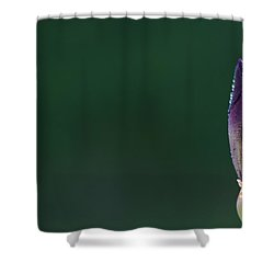 Iris 8 Shower Curtain by Nathan Larson