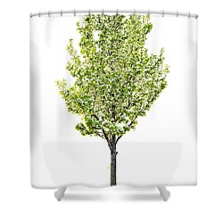 Isolated Flowering Pear Tree Shower Curtain by Elena Elisseeva