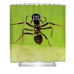 Japanese Slave-making Ant Polyergus Shower Curtain by Satoshi Kuribayashi