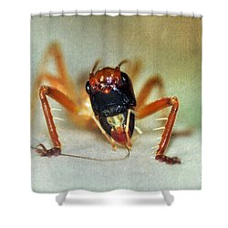 Jiminy Cricket 2 Shower Curtain by Kaye Menner
