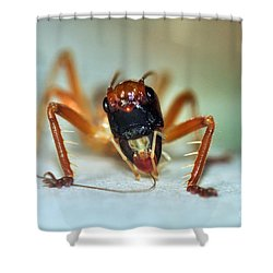 Jiminy Cricket Shower Curtain by Kaye Menner