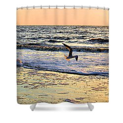 Jonathan Livingston Seagull Shower Curtain by Kristin Elmquist