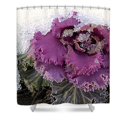 Kale Plant In Snow Shower Curtain by Sandi OReilly