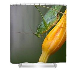 Katydid Shower Curtain by Karol Livote