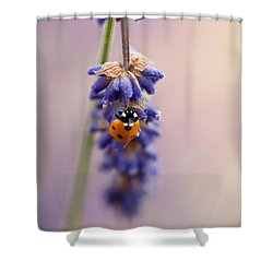 Ladybird And Lavender Shower Curtain by John Edwards