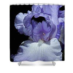 Lavender Blue Iris Shower Curtain by Phyllis Denton