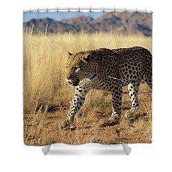 Leopard Panthera Pardus Walking, Africa Shower Curtain by Winfried Wisniewski