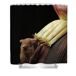 Lesser Long-tongued Fruit Bat Shower Curtain by Ch'ien Lee