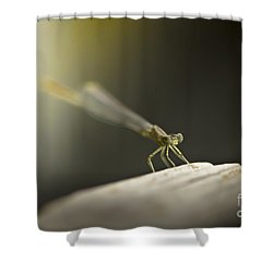Like An Angel Shower Curtain by Kim Henderson