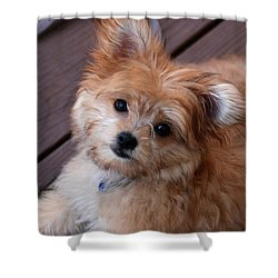 Little Darling Shower Curtain by Angie Tirado