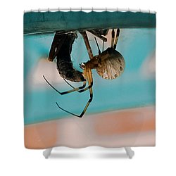 Little Miss Venom Shower Curtain by DigiArt Diaries by Vicky B Fuller