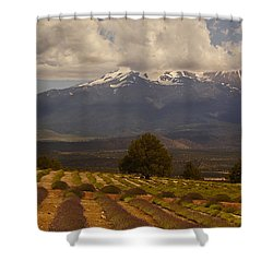Lone Tree And Lavender Fields Shower Curtain by Mick Anderson