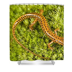 Longtail Salamander Eurycea Longicauda Shower Curtain by Jack Goldfarb