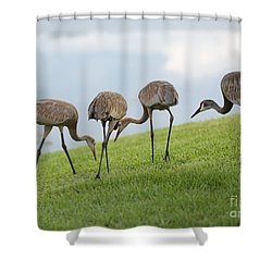 Look What I Found Shower Curtain by Carol Groenen
