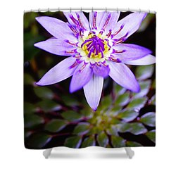 Lovely Lavendar Liliy Shower Curtain by Kicka Witte