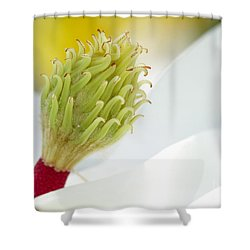 Magnificant Magnolia Macro  Shower Curtain by Sabrina L Ryan