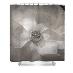 Magnolia 3 Shower Curtain by Rich Franco