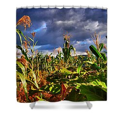 Maiz Shower Curtain by Skip Hunt