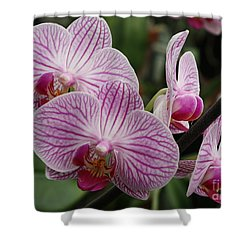 Majestic Orchids Shower Curtain by Carol Groenen