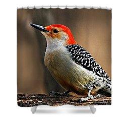 Male Red-bellied Woodpecker 4 Shower Curtain by Larry Ricker