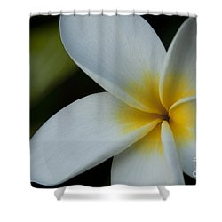 Mana I Ka Lani - Tropical Plumeria Hawaii Shower Curtain by Sharon Mau